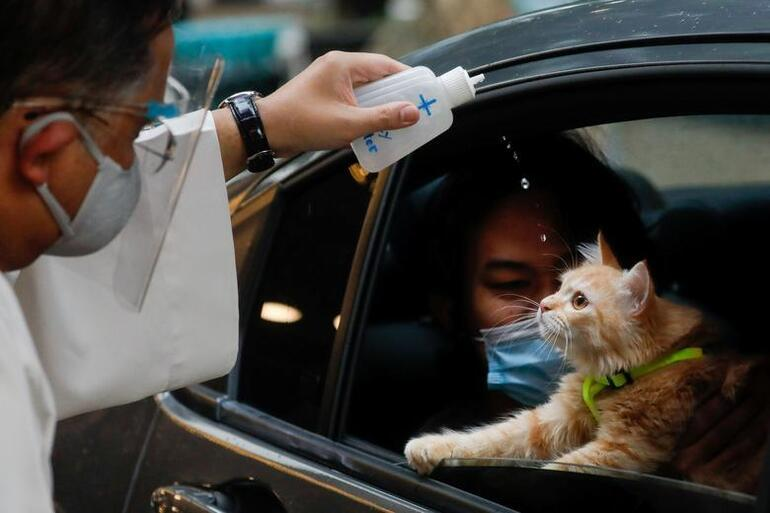 Dünya bu kararı konuşuyor... Kedilere sokağa çıkma yasağı